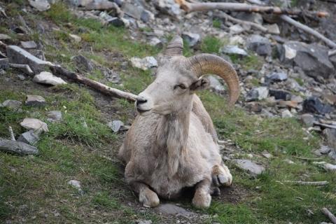 Banff 15